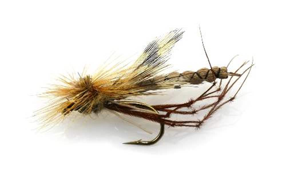 Steves Daddy/Crane Fly
