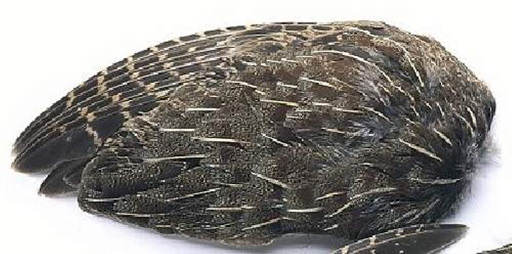 English Grey Partridge Whole Wings