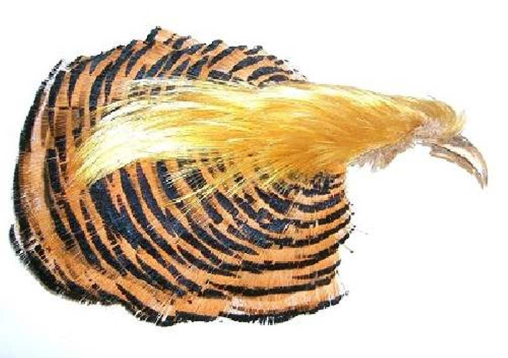 Golden Pheasant Complete Head No 2