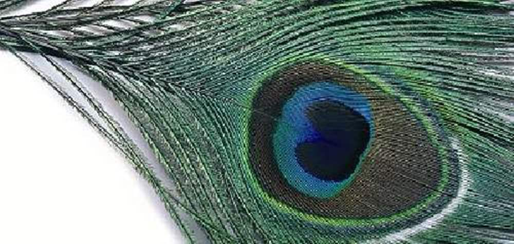 Peacock Eye Top
