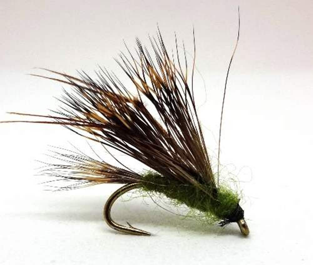 Barbless Olive Sedgehog