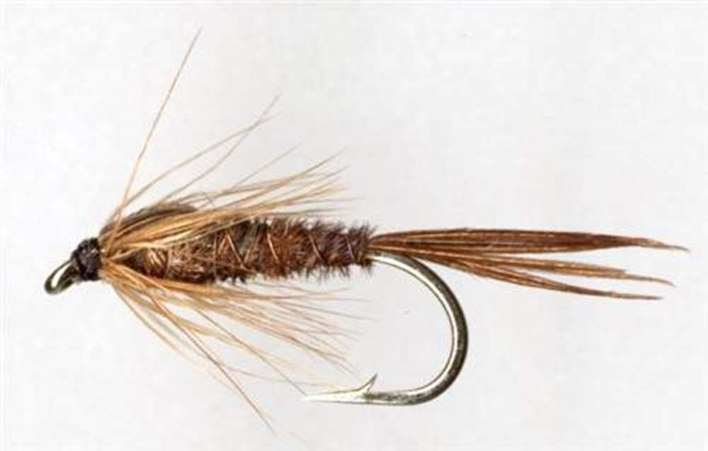 Pheasant Tail Nymph (Ptn)