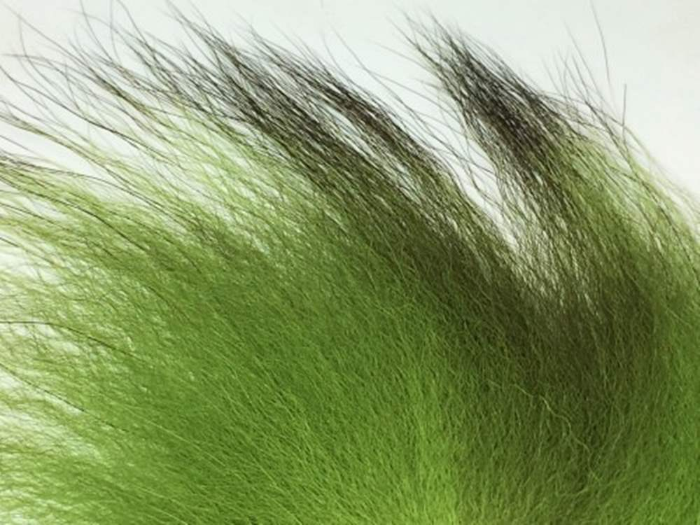 Arctic Fisherman - Mutation Fox - Chartreuse