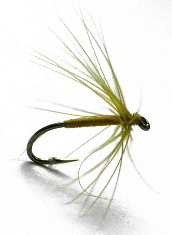 Olive Bloa Northern Spider Trout Fly