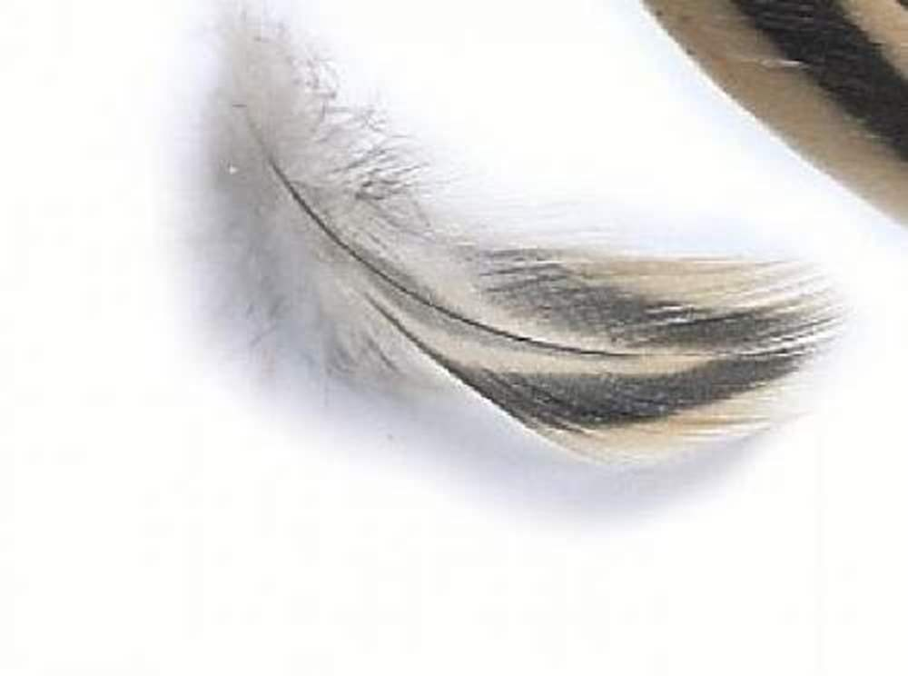 Mallard Hen Breast Feathers