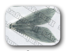 Hemmingway Caddis Wings / Gray Extra Large size (15 pieces, (10 hook size)