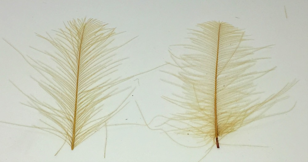 Veniard - CDC Super Select Feathers - Brown Olive