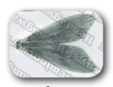 Hemmingway Caddis Wings / Gray Small size (27 pieces, (16 hook size)