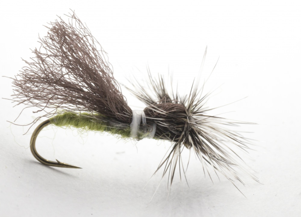 Parapoly Sedge - Dark Olive