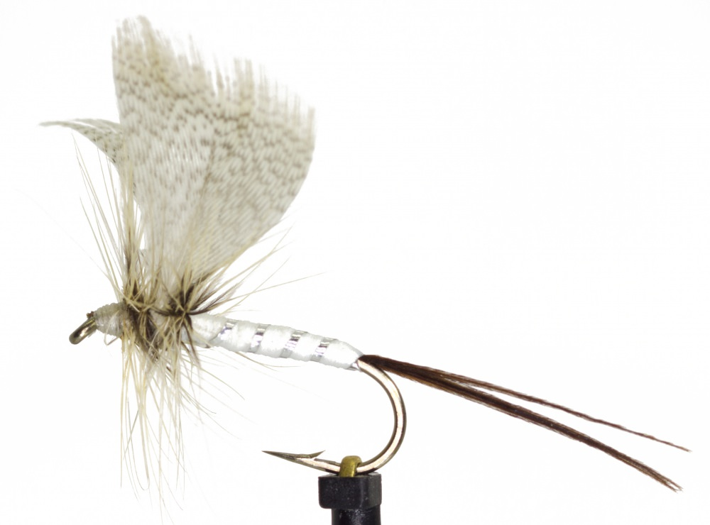 White Drake Mayfly