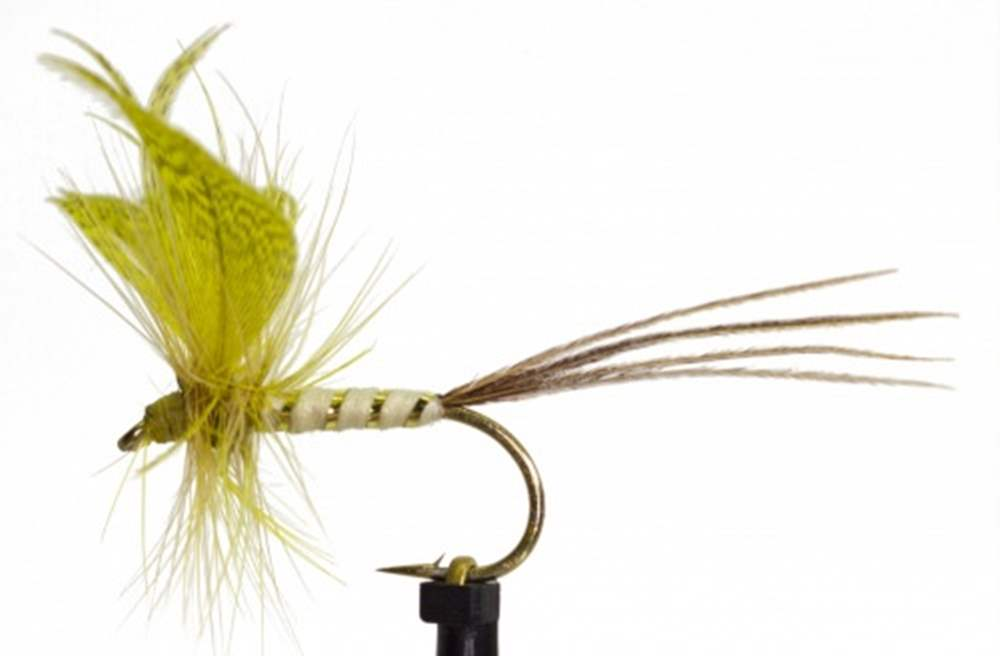 Yellow Drake Mayfly