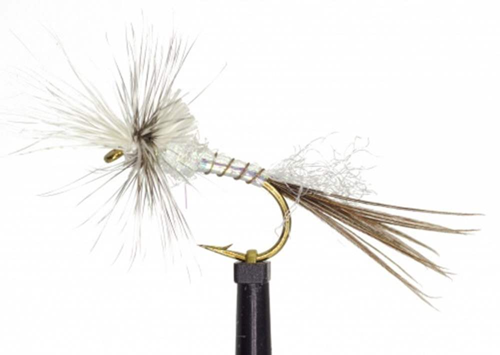 White Drake Cripple Mayfly