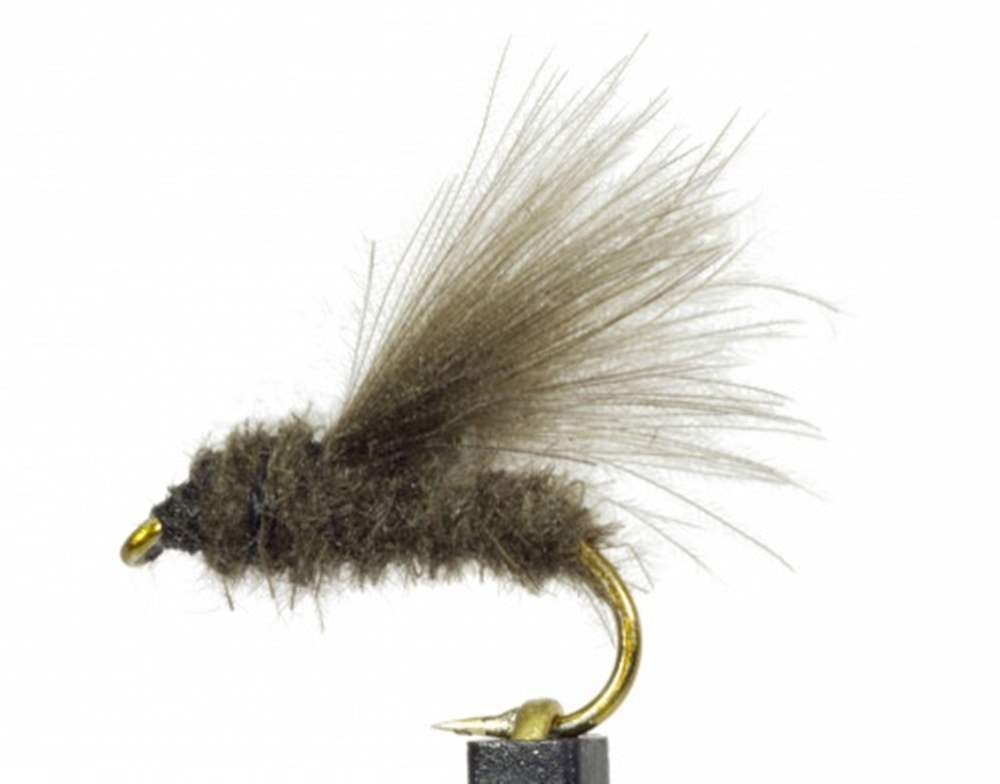 Sedge Dark Dun Cdc